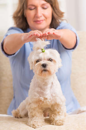 Woman doing Reiki therapy for a dog, a kind of energy medicine  Kho ảnh