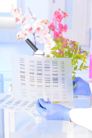 nucleic: Scientist analizing DNA sequence for GMO experiments with plants