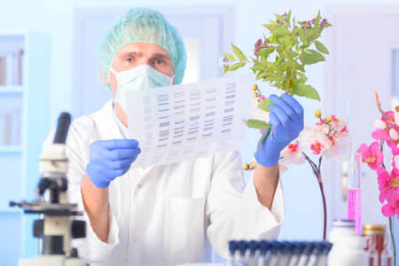Scientist analizing DNA sequence for GMO experiments with plants photo