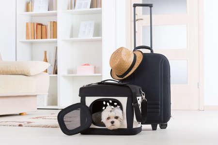 Kleine hond maltese zitten in zijn transporter of tas en wachten op een reis Stockfoto