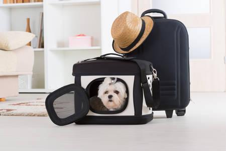 Cão pequeno maltês de estar em seu transportador ou saco e à espera de uma viagem