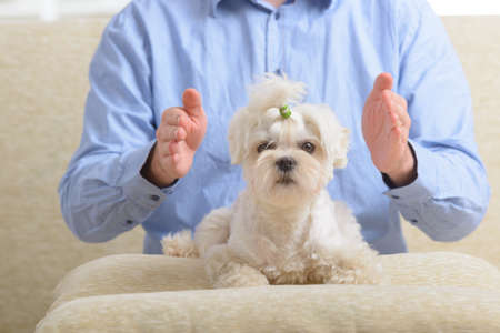 Man doing Reiki therapy for a dog, a kind of energy medicine