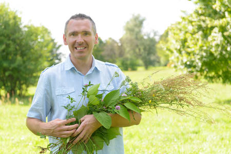 wild herbs: Man homeopath herbalist picking up wild herbs with a Stock Photo
