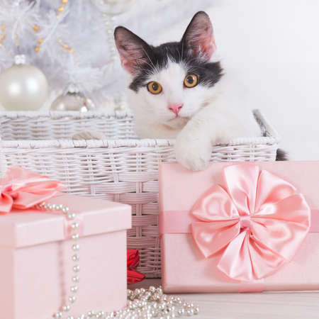 Cute little cat sitting with gifts near Christmas tree photo