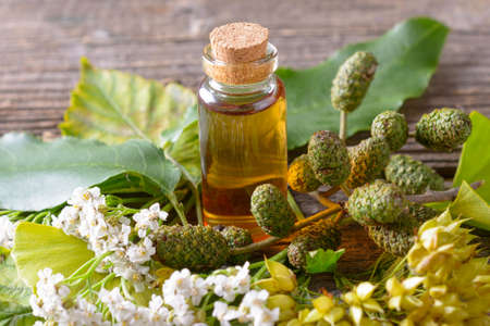 ginkgo leaf: Pure herbal essential oil in glass bottle on woden desk with ginkgo leaf and alder cones Stock Photo