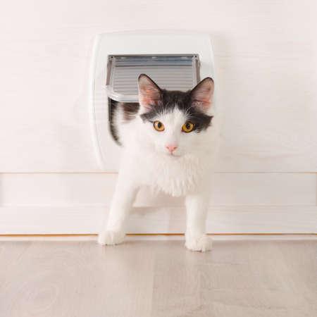 puerta: Cat pasa a trav�s de la puerta gato en casa