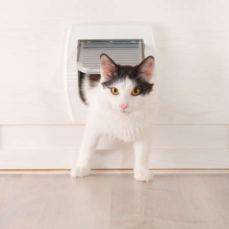 a small house: Cat passing through the cat door at home Stock Photo