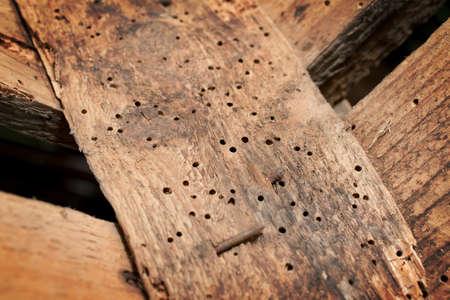 구멍 뚫는 사람에 의해 손상된 오래된 나무