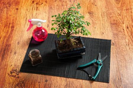 mat like: Beautiful bonsai tree, and sprayer scissors on wooden background Stock Photo
