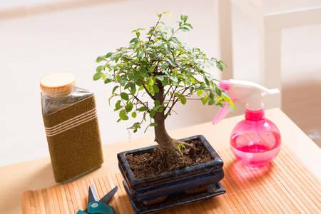 mat like: Beautiful bonsai tree, and sprayer scissors Stock Photo