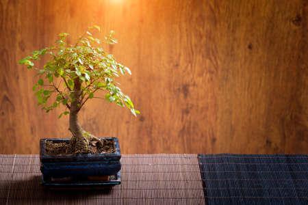 bonsai tree: Beautiful bonsai tree on wooden background