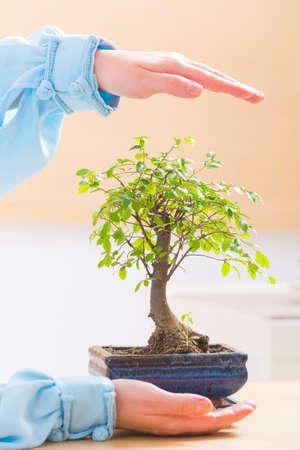 bonsai tree: Beautiful bonsai tree with womans hands