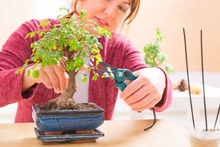 bonsai: Beautiful woman trimming bonsai tree