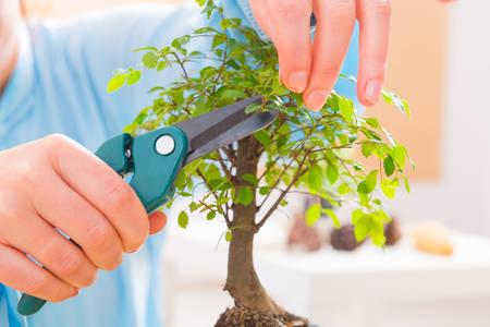 tree trimming: Beautiful woman wearing traditional chinese uniform trimming bonsai tree