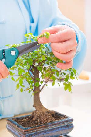 tree trimming: Woman wearing traditional chinese uniform trimming bonsai tree