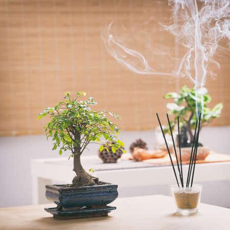 bonsai tree: Beautiful bonsai tree with incense stick Stock Photo