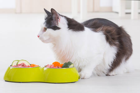 cat eating: Black and white cat eating natural, organic food from a bowl at home Stock Photo