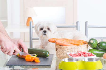 Przygotowanie naturalne naturalne, organiczne jedzenie dla zwierząt w domu Zdjęcie Seryjne