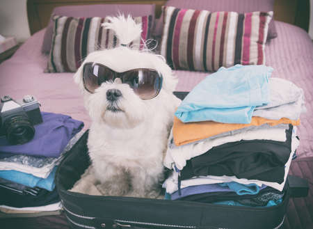 perros graciosos: Small dog maltese sitting in the suitcase or bag wearing sunglasses and waiting for a trip Foto de archivo