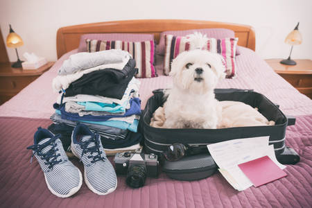 Small dog maltese sitting in the suitcase or bag wearing sunglasses and waiting for a trip Standard-Bild