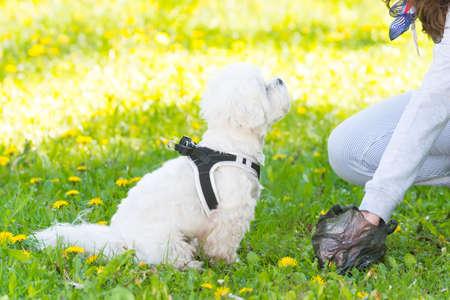 obedecer: Propietario limpieza después del perro con bolsa de plástico