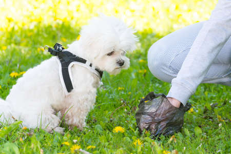 Owner cleaning up after the dog with plastic bag Archivio Fotografico