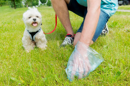 Owner cleaning up after the dog with plastic bag 스톡 콘텐츠