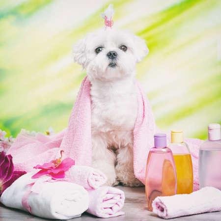 Kleiner Hund im Spa Ruhe nach Pflege Standard-Bild