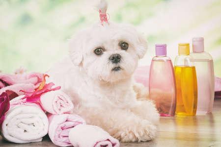 Pequeño perro en el spa de descanso después de la limpieza Foto de archivo
