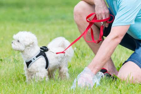 Propietario limpiando después del perro con bolsa de plástico Foto de archivo