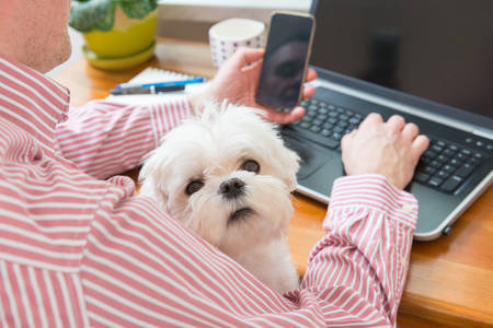 Man working at home and holding his liitle dog. Archivio Fotografico