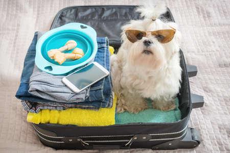 Petit chien assis maltese dans la valise ou un sac portant des lunettes de soleil et d'attente pour un voyage