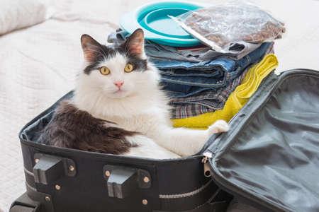 スーツケースやバッグに座っていると、旅行のために待っている猫。ペットの概念と旅行します。