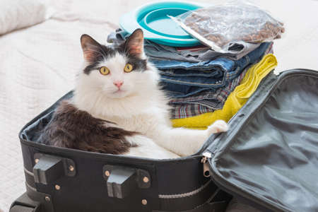 Cat sitting in the suitcase or bag and waiting for a trip. Travel with pets concept