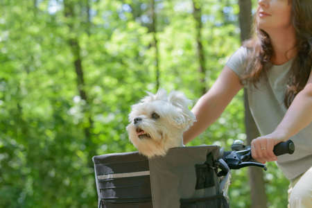 Beautiful mature woman riding a bike with her pet maltese dog in a basket
