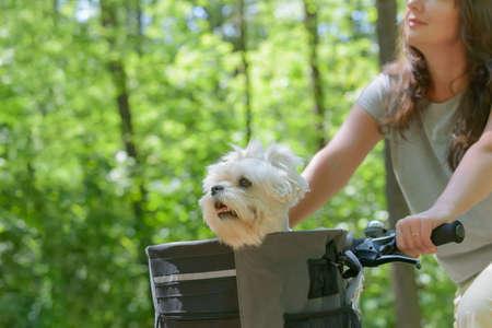 Mooie rijpe vrouw die een fiets rijdt met haar huisdier-maltese hond in een mand