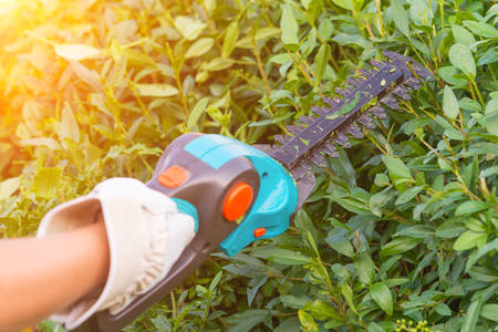 Hands with garden battery shears cutting a hedge Stock Photo