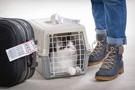 Gata na companhia aérea transportadora de animais de estimação que espera no aeroporto depois de uma longa jornada