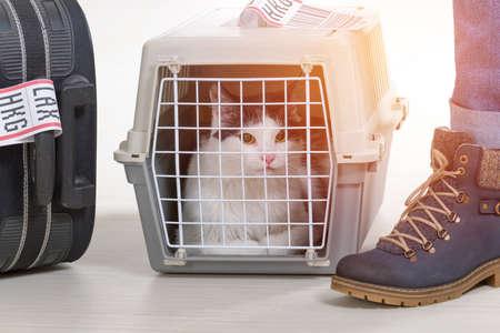 Gata na companhia aérea transportadora de animais de estimação que espera no aeroporto depois de uma longa jornada Foto de archivo