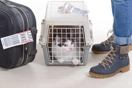 Gato en el transportador de mascotas de carga aérea esperando en el aeropuerto después de un largo viaje