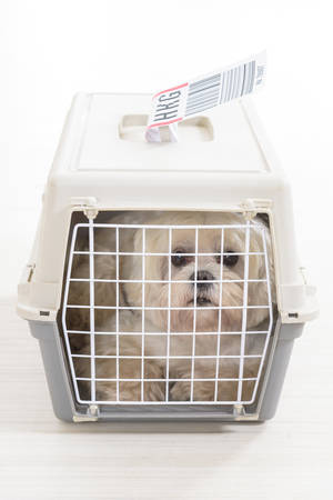 little dog in the airline cargo pet carrier waiting at the airport after a long journey