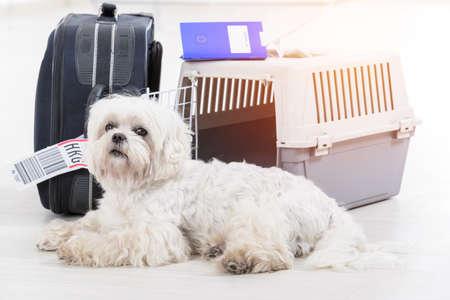 Perrito esperando en el aeropuerto después de un largo viaje con el transportista de mascotas de carga de línea aérea y el equipaje de su propietario en el fondo