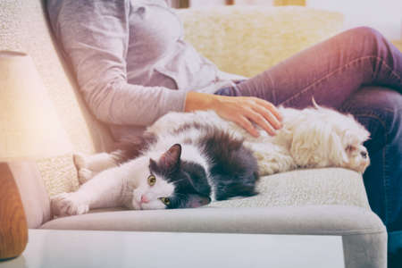 Woman sitting on sofa in living room with her pets little dog and cat Standard-Bild