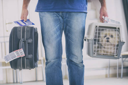 little dog in the airline cargo pet carrier at the airport after a long journey Foto de archivo