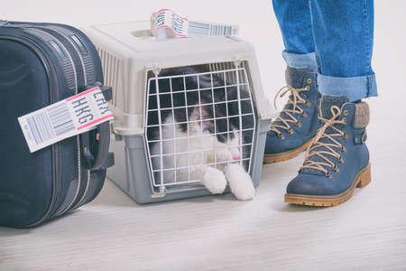 Chat dans le transporteur d'animaux de compagnie de fret aérien en attente à l'aéroport après un long voyage Banque d'images