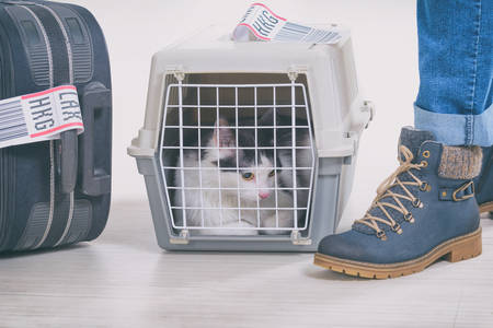 Cat in the airline cargo pet carrier waiting at the airport after a long journey Stock fotó
