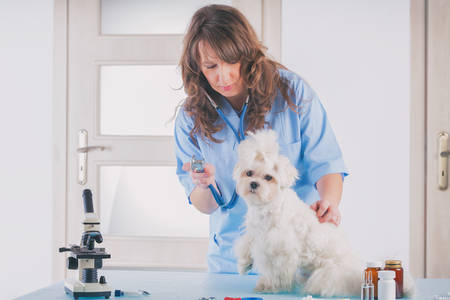smiling woman veterinarian examining dog with stethoscope in vet clinic