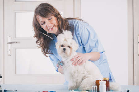 smiling woman veterinarian examining dog with stethoscope in vet clinic Фото со стока - 133664006