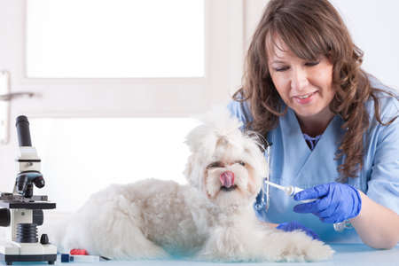 smiling woman vet is giving medicine to the dog in vet clinic