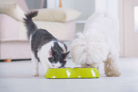 Maltees hondje en zwart-witte kat die eten uit een kom thuis eten